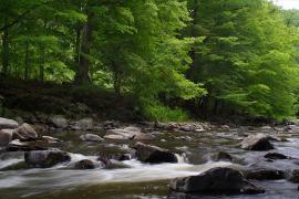 Řeka Oslava, autor: JaraII CC 3.0 Unported