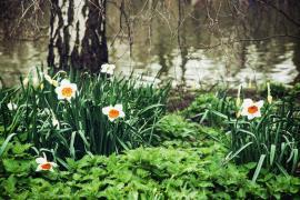 Kopřiva roste téměř všude okolo nás, zřejmě nám naznačuje, že patří k nejléčivějším bylinám (plevelům) a opravdu ji potřebujeme