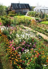 Kdo má rád zeleninu a květiny, zahradničí ve velkém