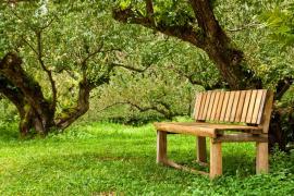 Zatrucujte si ve stínu stromů