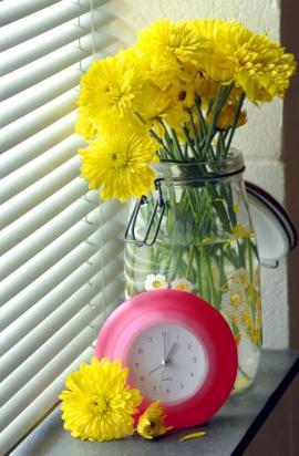 Řezané chryzantémy
