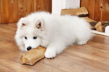Pohoda na vyhřáté dřevěné podlaze