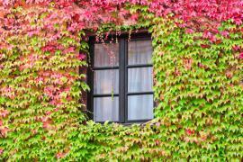 Přísavník na začátku podzimu