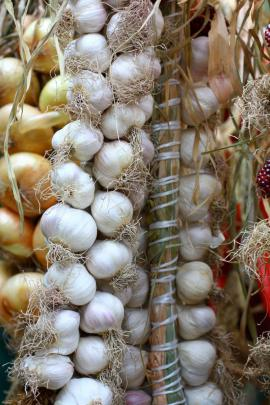 Česnek a cibule uvázané do copů