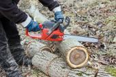 Dřevo ořešáku