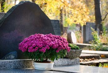 Chryzantémy na hrobě