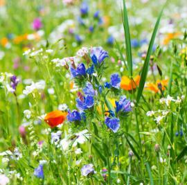 Bohatá rostlinná skladba květinové louky
