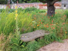 Divoký porost v části zahrady