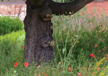 Starý strom v zahradě