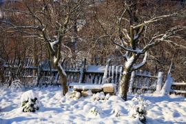 Staré zahrady si o doupné stromy přímo říkají