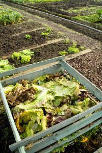 Záhony a kompost