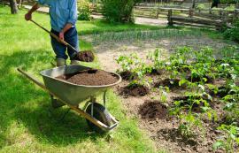 Přidávání kompostu na záhony