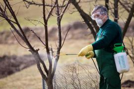 Předjarní chemický postřik ovocných stromů