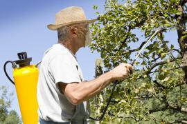 Postřik ovocného stromu po odkvětu