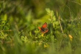 Motýlí zahrada