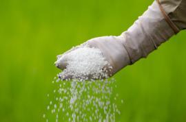 Ruční rozhoz minerálního hnojiva