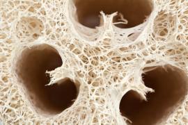 Struktura vláken lufy
