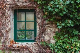 Podzim - stálezelený břečťan stále chrání fasádu, zatímco opadavé popínavky zanechávají jen torzo vegetační slávy