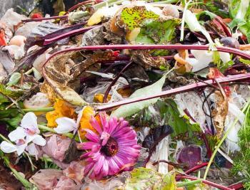 Co do kompostu patří