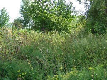 """Když na místo zanedbané přírodní zahrady nastoupí """"ruderální"""" plevele"""