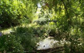 Voda má vpřírodní zahradě nezastupitelné místo