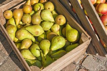 Uskladňované ovoce