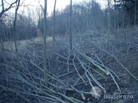 Průřez dřevin