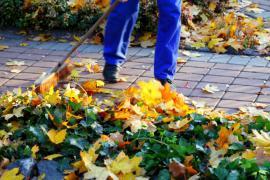 Likvidace spadaného listí