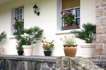 Výzdoba oken květinami