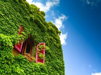 Okno v zeleni