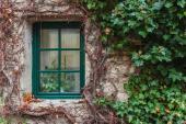 Okno a zeleň