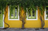 Rostlinami lze okno ozdobit i shora