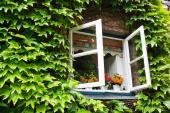 Květinová výzdoba okna