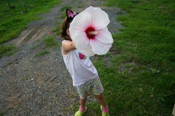 Obrovitý květ ibišku bahenního