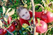 Děti pomohou rády i se sklizní jablek
