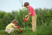 Nechte děti vysadit a zalévat třeba jejich vlastní strom