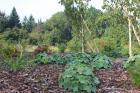 Přírodní zahrada v Lužických horách