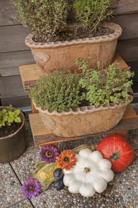Rostliny v mobilních nádobách