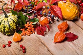 Podzim nabízí neskutečné množství dekoračního materiálu