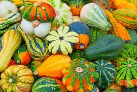 Okrasné dýně jsou jedním ze základů podzimních dekorací