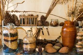 Sušina a semena v různých podobách