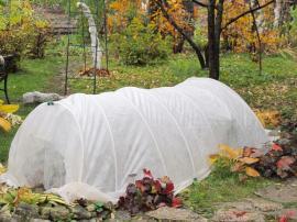 Ochrana rostlin netkanou textilií před holomrazy