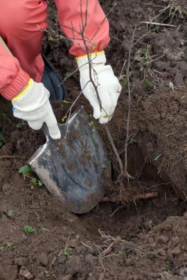 Výsadba stromku