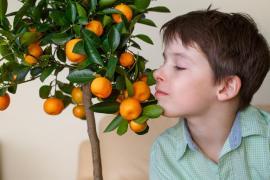Mandarinky nádherně voní