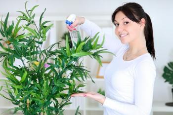 Rosení pokojových rostlin