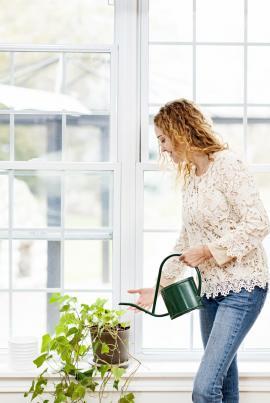 Většinu pokojových rostlin zaléváme shora