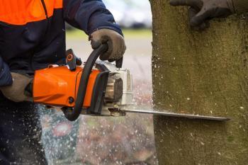 Žádost o pokácení stromu na obecním pozemku