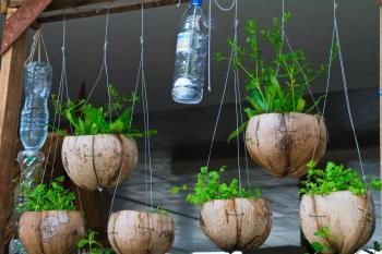 Květináče z kokosových ořechů a automatická závlaha z PET lahví