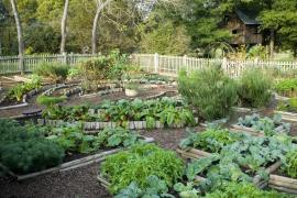 Velká užitková zahrada