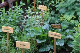 Bylinky pěstujeme nahloučeně